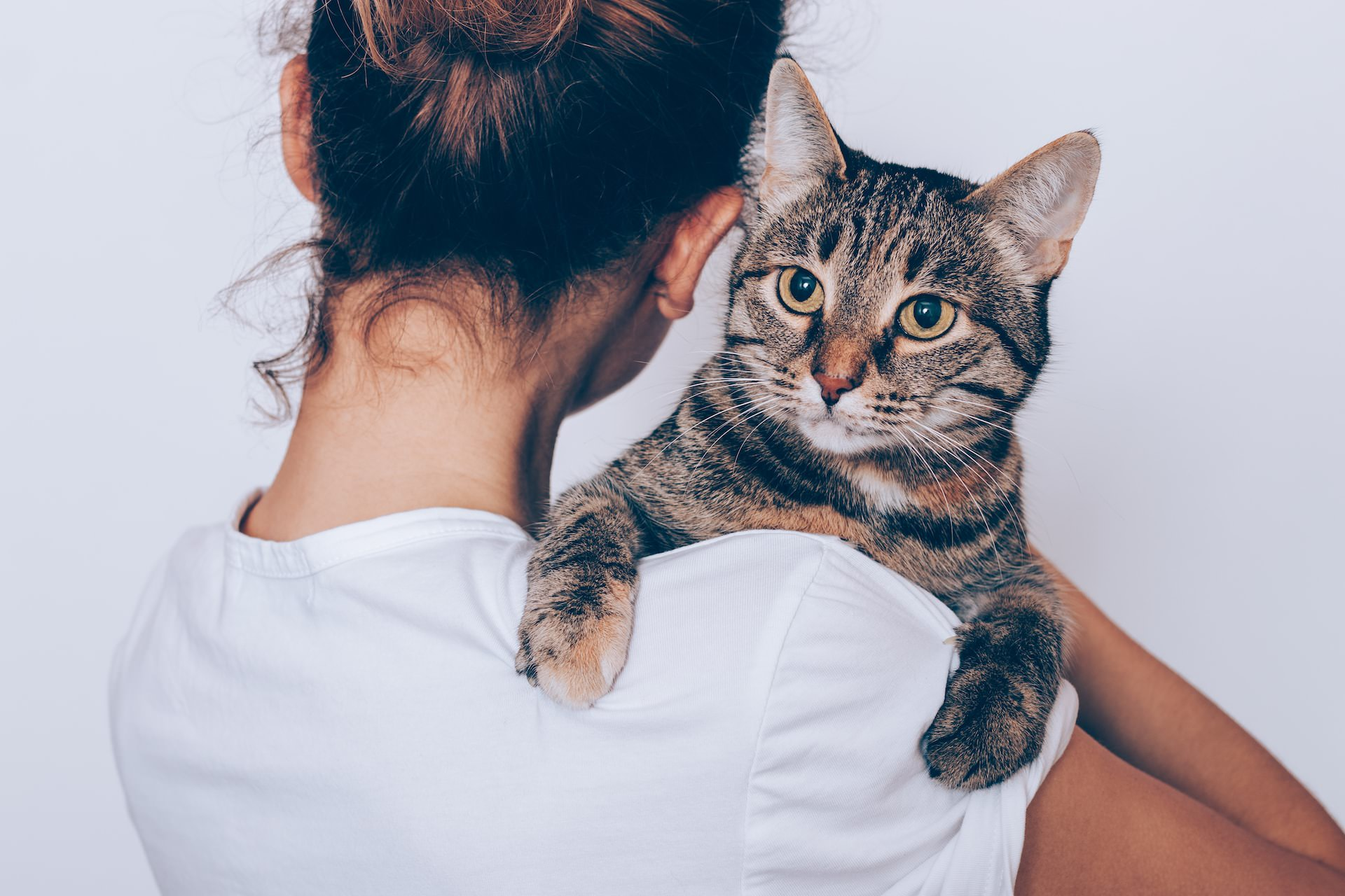 Cat on a woman's shoulders
