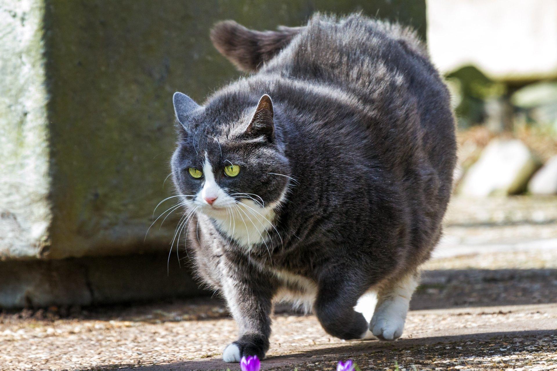 Днем, картинки толстых котов