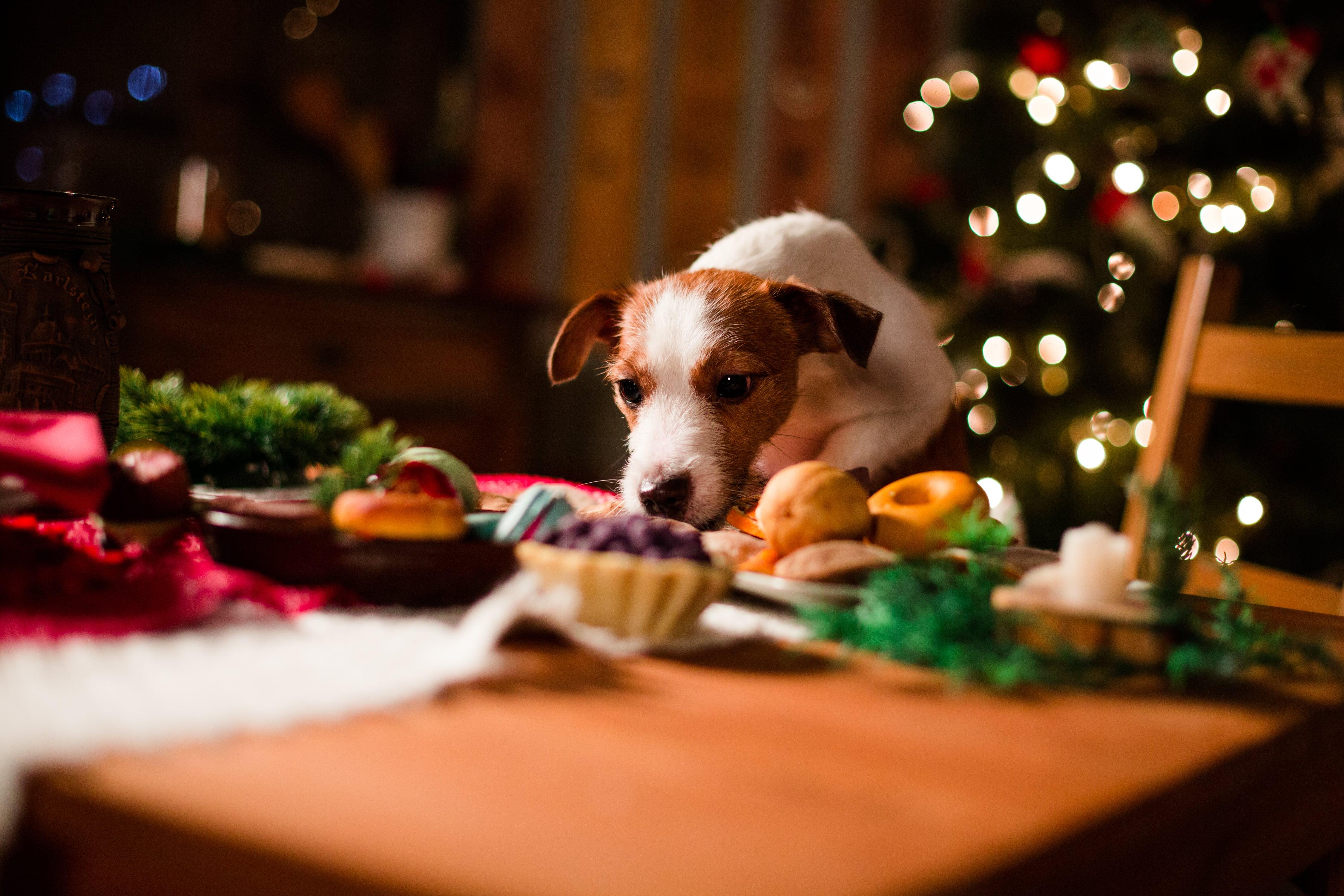 Dog at the Christmas Table