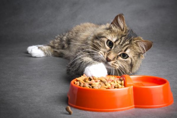 Cat nutrition