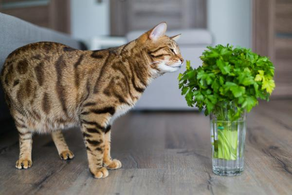 Cat sniffing parsley